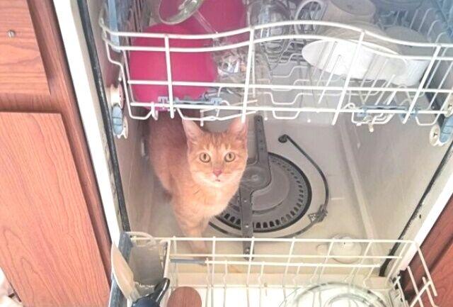「そこ入ったらダメ!」「にゃんで?」猫だから仕方ないけど絶対あかん場所に侵入した現場の写真集