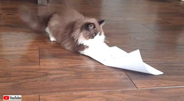cattrapchallenge3_640