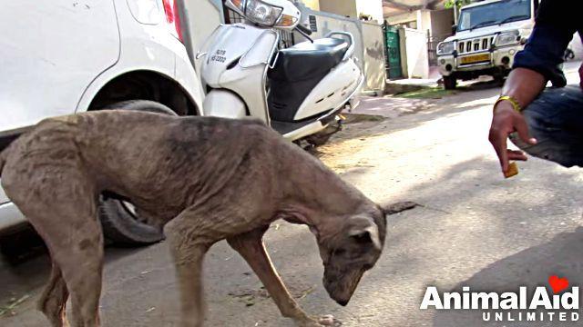 animalaid2
