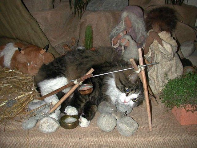 cats-crashing-nativity-scenes-102-5a27c49c6b90d__605_e