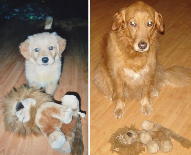pets-growing-up-with-toys-291__700_e