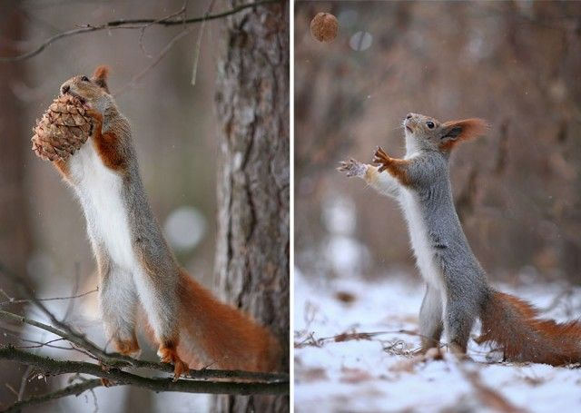 squirrel-photography-russia-vadim-trunov-15_e