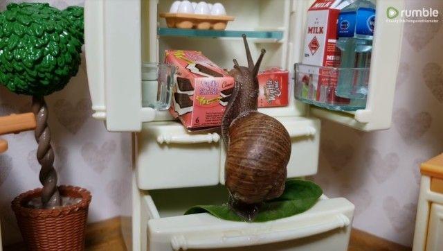 snail3_e