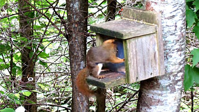 SquirrelSmashesThumb3