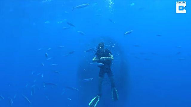 fishsurrounddiver2