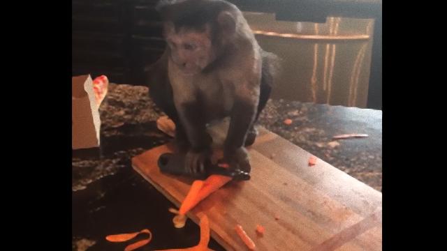 monkey-4_e