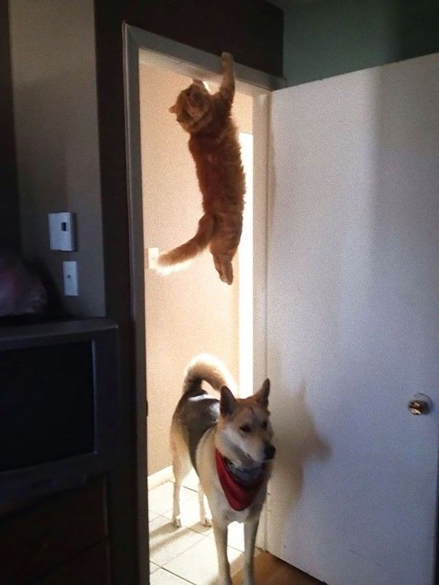 flyingcats3_e