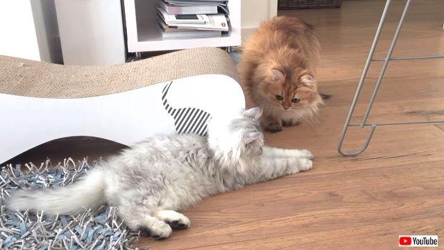 introducingtwocats6_640