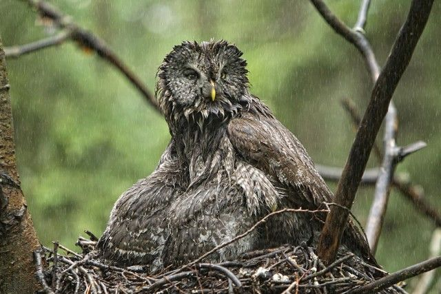 owl-photography-11__880_e