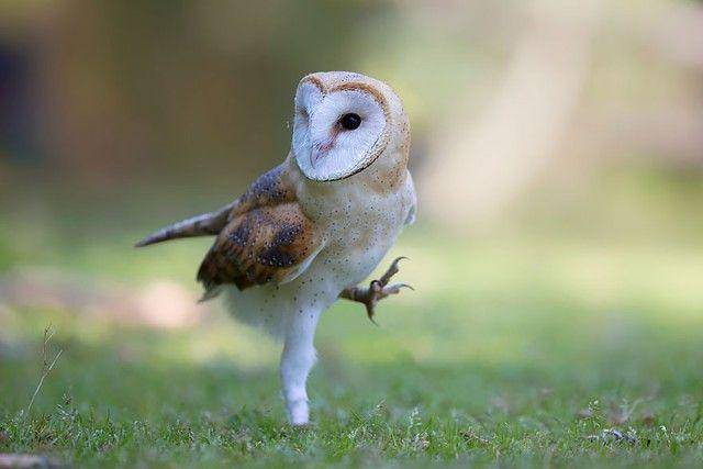 owl-photography-7__880_e
