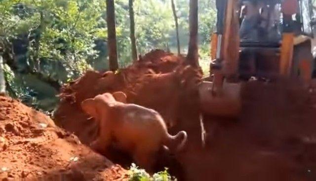 elephantsalutes6_e