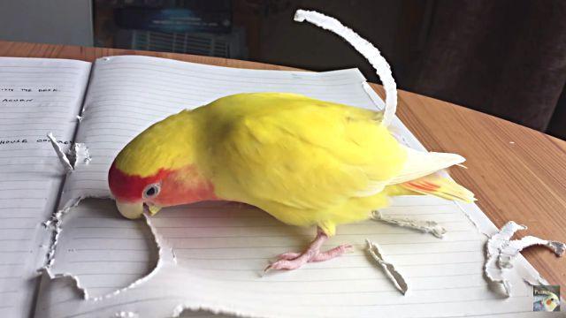 parrotnnotebook4