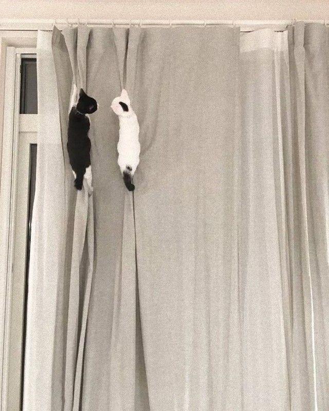 flyingcats9_e