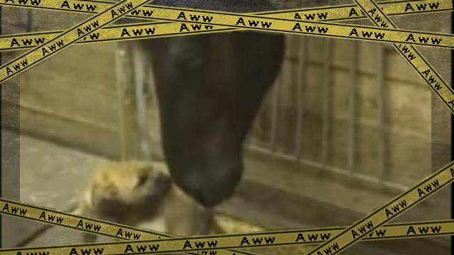 terrier [www-frame