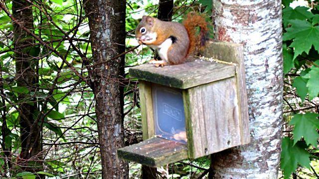 SquirrelSmashesThumb0