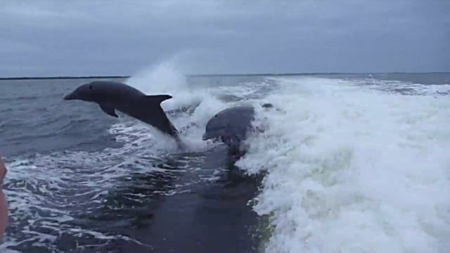 dolphincollision2
