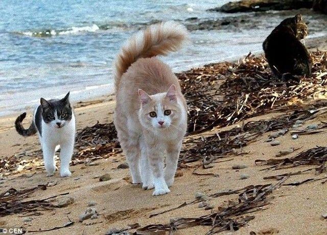 su-pallosu_sardinia_cats_beach_e