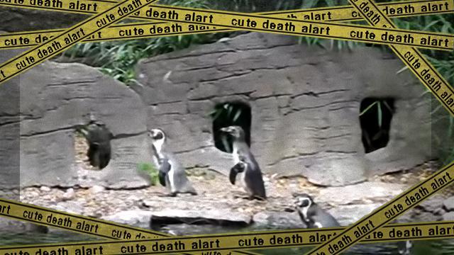 penguin-2_e-frame