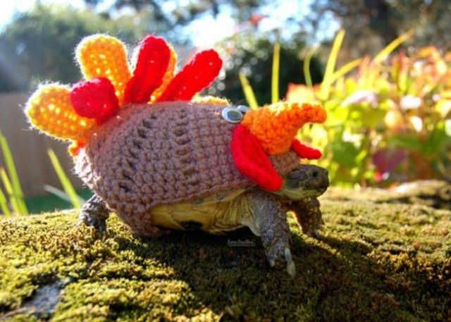 sweater-tortoise-turkey_e