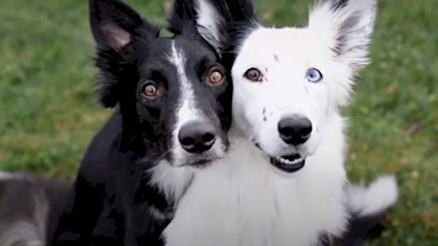 huggingdogs1