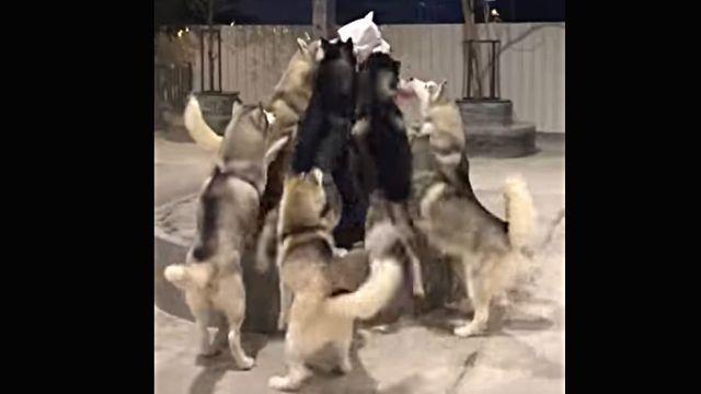 welcomingdogs1