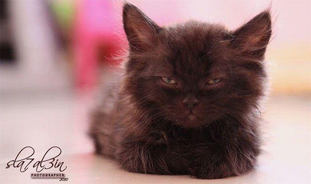 angry-kittens-18-591af44b44b28__700_e