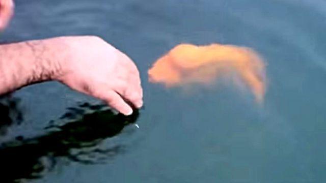 petfish2