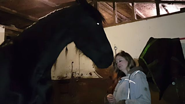horsewantshug1