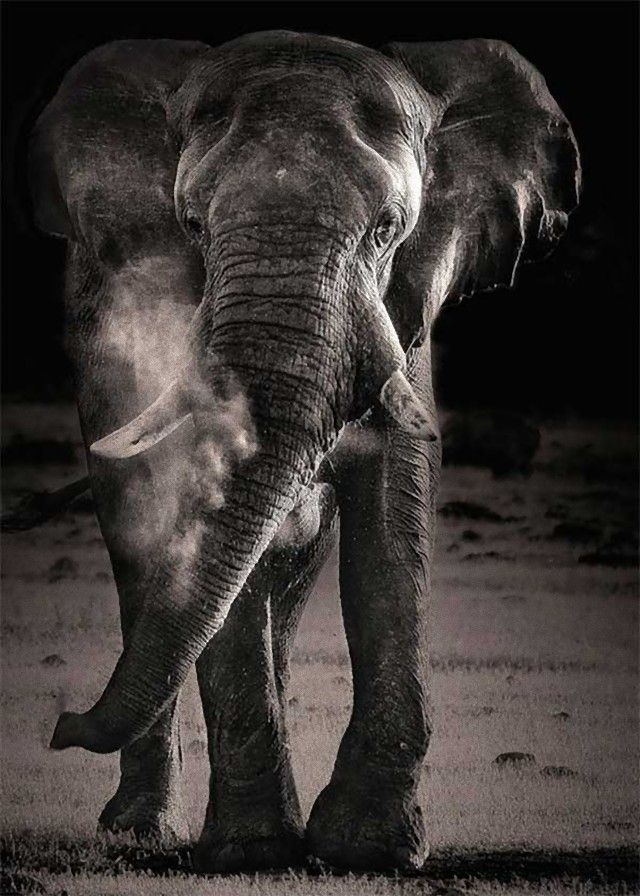 elephant4_e