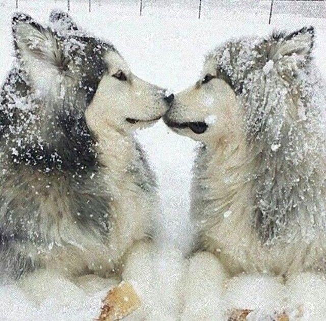 kiss4_e