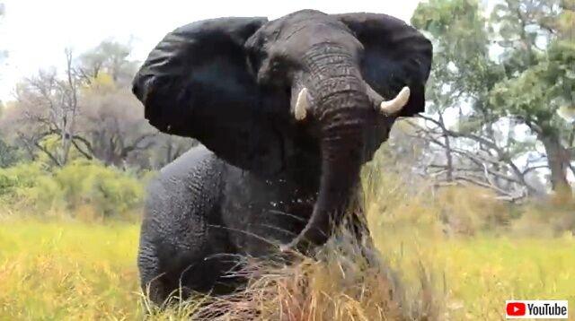elephanttantrum2_640