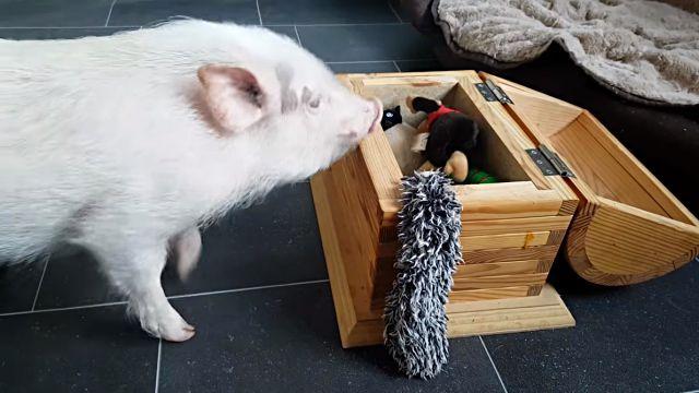 piggy2