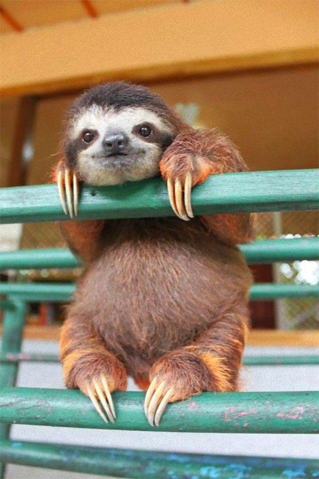 sloth_e