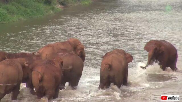 elephantscalled5_640