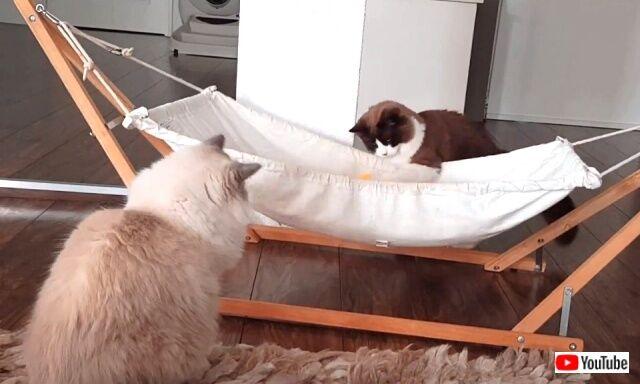 hammock4_640