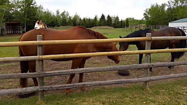 horsetaxi5