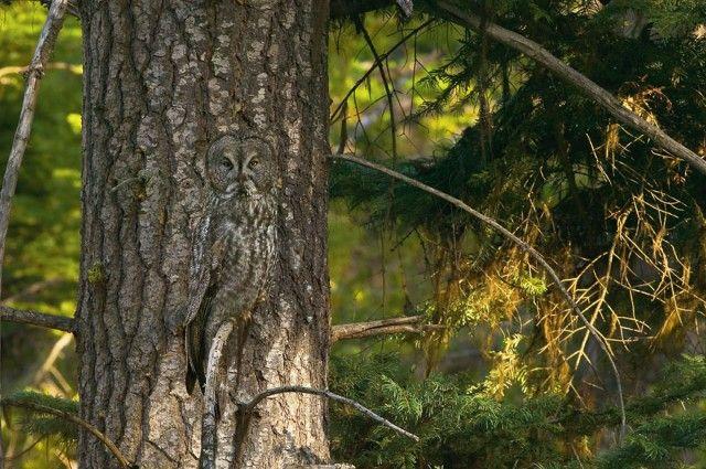 owl-photography-35__880_e
