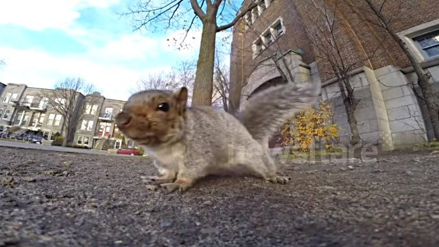 goprosquirrel0