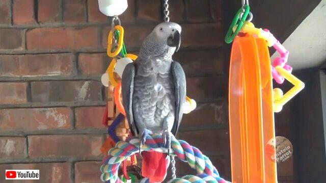 parrotnsquirrel1_640