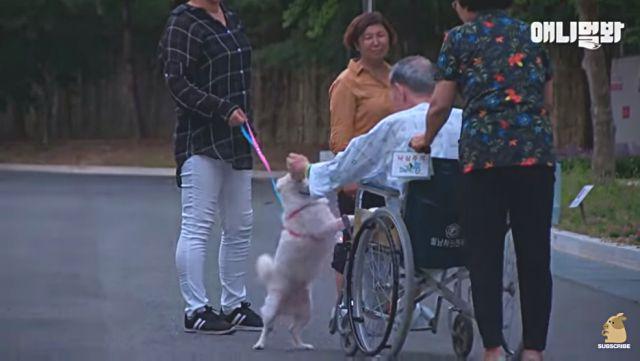 koreandog3