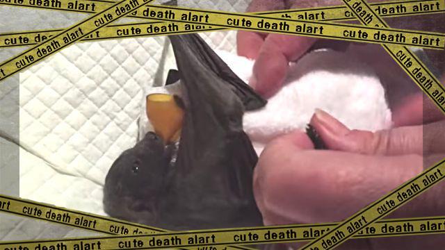 bat1-frame