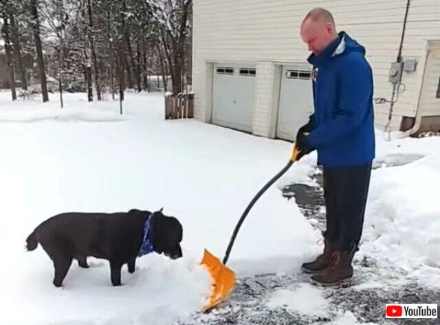 shovel1_640