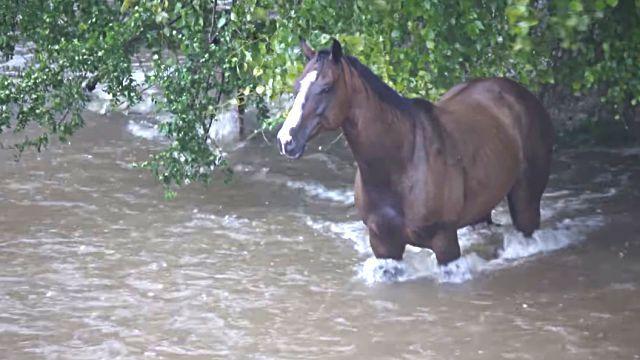 floodhorse2