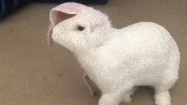 rabbit-1_e_e