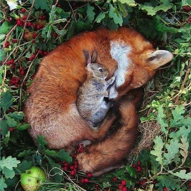 cuddle14_e