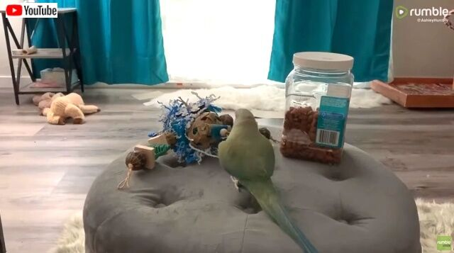 parrotreacts3_640