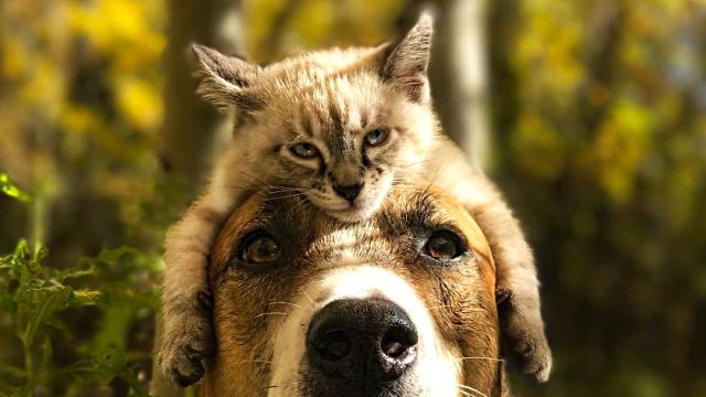 cat-and-dog-friendship-1-6a