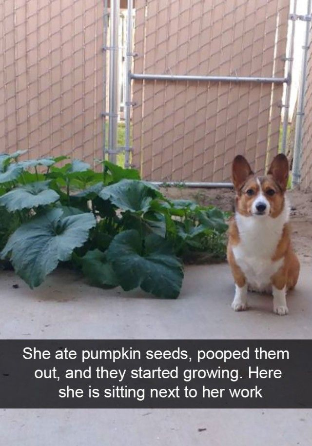 hilarious-dog-snapchats2_e