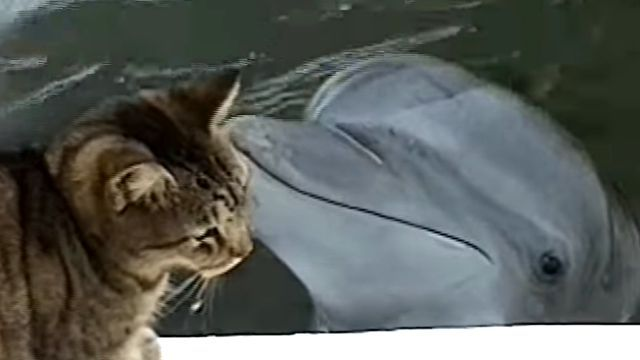 catndolphin0
