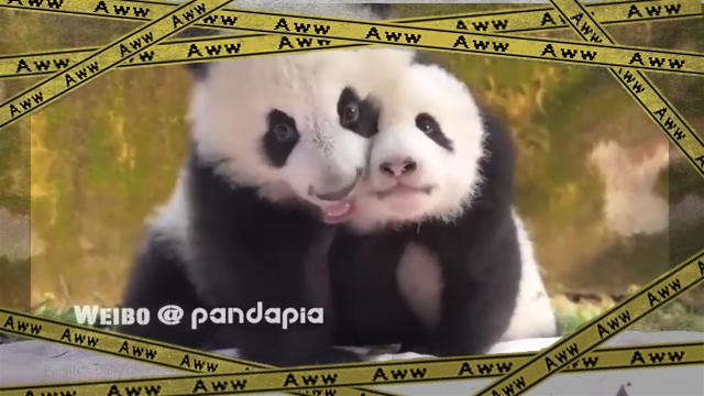 panda-f [www-frame